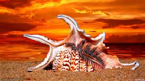 tlcharger fond d ecran vier coucher du soleil plage