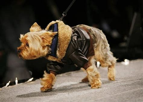yorkie jackets small yorkie terrier leather bomber jacket for small dogs boy clothes