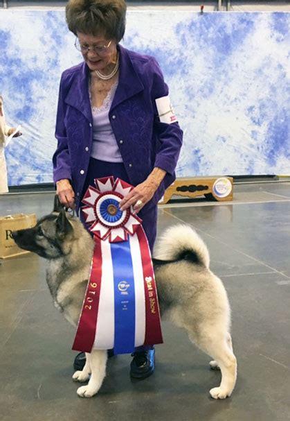canine chronicle canine chronicle autos weblog
