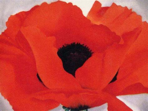 georgia okeeffe 25 jahre 3836531895 94 best images about georgia o keeffe on flower pansies and poppies