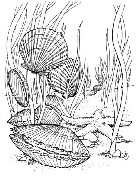 Sea Floor Drawing by Sea Floor Drawing