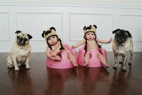 pugs and children pug is my best friend pics of pugs and together pets world