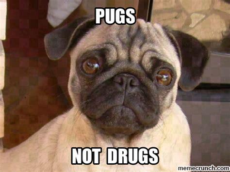 pugs not pug memes