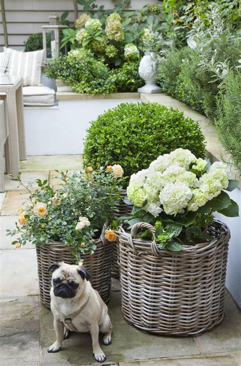 pug mix gravel 433 best images about landscape on backyard landscaping landscapes and