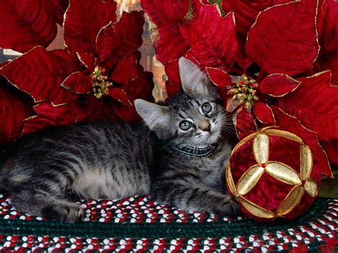 cat xmas wallpaper kitten under tree christmas wallpaper 2735973 fanpop