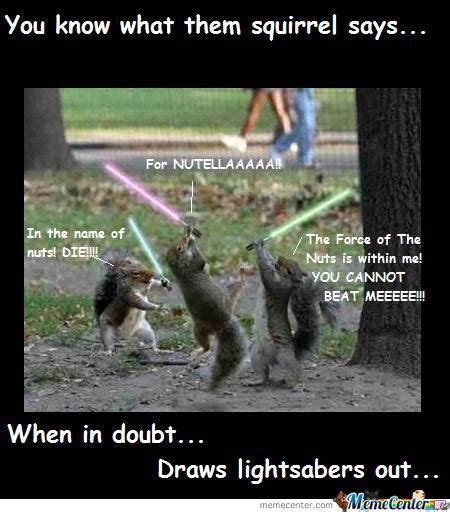 Funny Squirrel Memes - 43 best squirrel ninjas and other squirrelly things