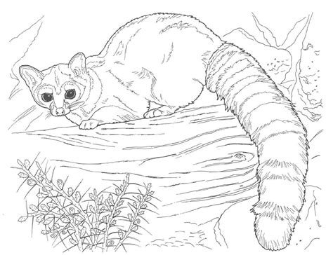 complex coloring pages of animals complex coloring pages of animals coloring home