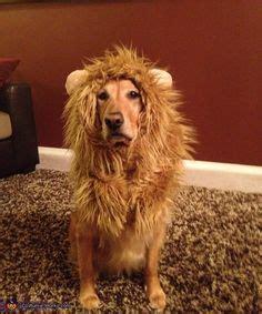 golden retriever costume for person pet costumes on pet costumes costumes and pet