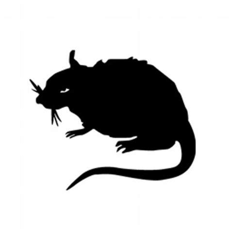 Stray Rats Miami Lo Fi stray rats strayrats
