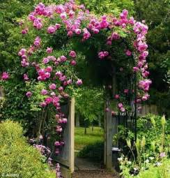 climbing flowering plants for shade the best climbing plant for shade landscaping and