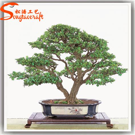 Trees For Sale Cheap - factory direct cheap price large outdoor bonsai