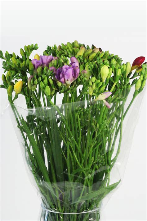 fiori modena orlandi ingrosso fiori modena fresia orlandi