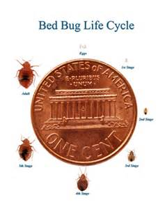 bed bugs clearcorps detroit