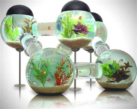 Aquarium D Eau Chaude by Aquarium Eau Chaude Pas Cher