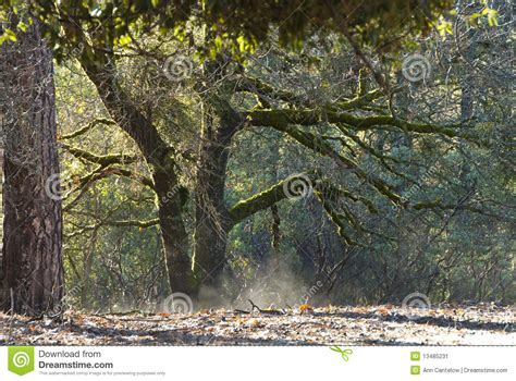 From The Forest Flooring by Steam Rising From The Forest Floor Stock Image Image