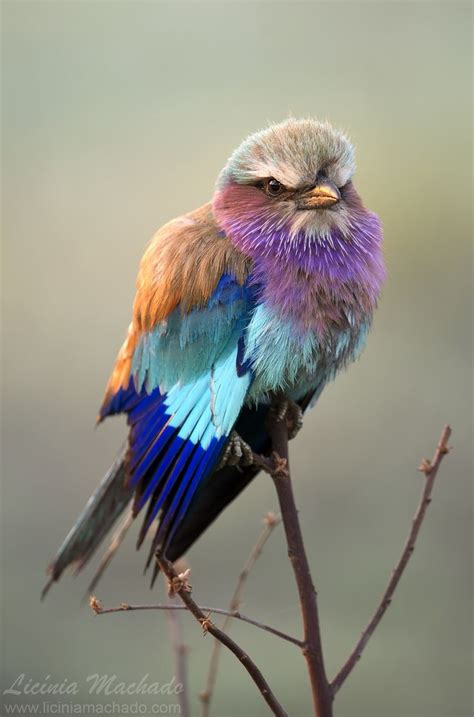 bird with colorful feathers 3794 best small flowers and birds images on