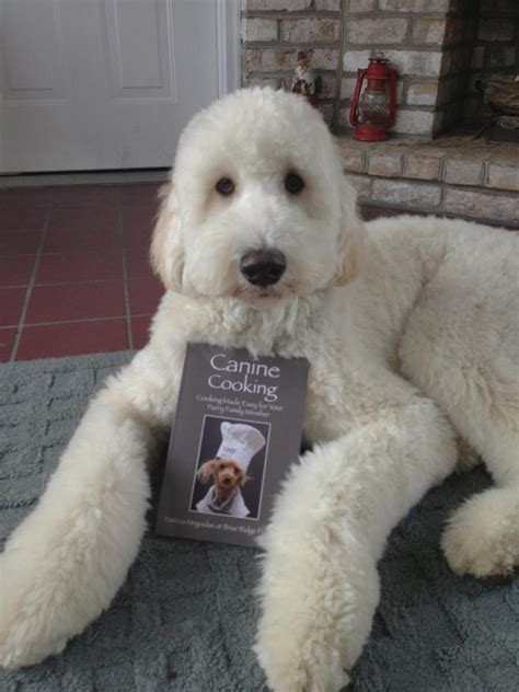 briar ridge puppies order our new canine cookbook here briar ridge puppies