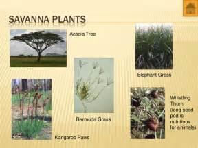 Tropical Desert Plant Adaptations - world biomes animals and plants