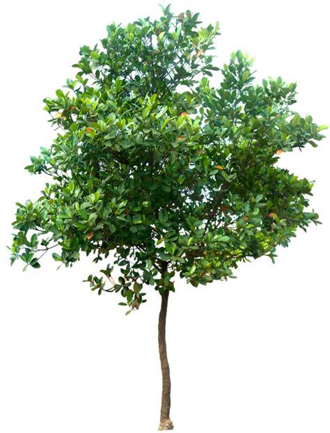 Fotos De Arboles En Png | 20 im 225 genes de 225 rbol png artocarpus heterophyllus02l