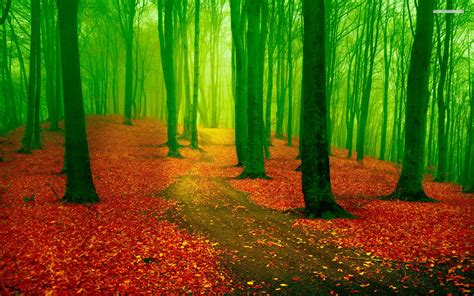 wallpaper green and red red leaf carpet green forest wallpapers red leaf carpet