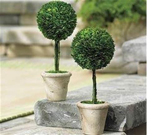 alberelli da vaso casa moderna roma italy alberi in vaso da esterno