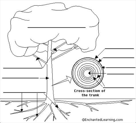 labeled tree diagram tree anatomy printable trees books crafts
