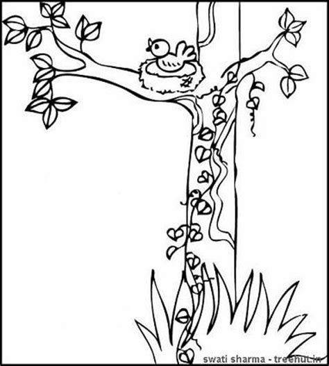 deciduous tree coloring page deciduous trees coloring coloring pages