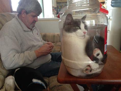 why cats are liquids the meta picture katzenbild 11k2