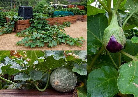 Best Vegetables For Home Garden Home Vegetable Gardens The Interior Designs