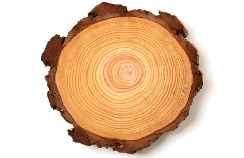 Tree Ring - forest floors
