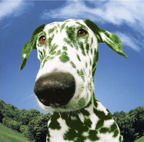 green puppy green pets eco friendly choices for cats and dogs