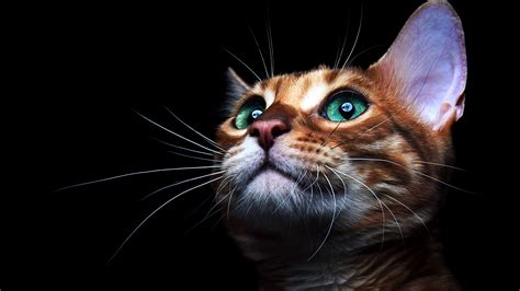 4k wallpaper open your eyes cat deep sea green eyes hd animals 4k wallpapers images