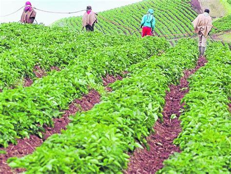 despensa agricola de colombia es posible convertir al pa 237 s en una despensa agr 237 cola