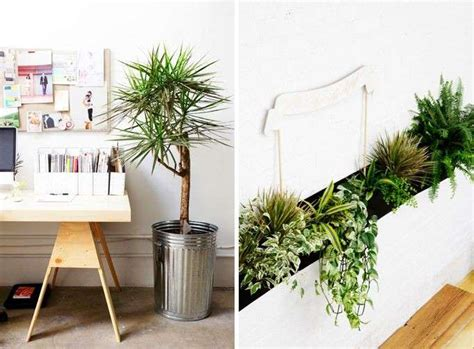 piante decorative da interno arredare con le piante da interno foto design mag