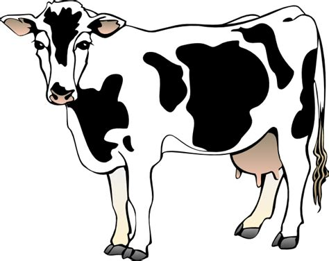 free drawing cow from the category farm animals ranch
