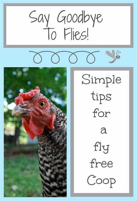 getting rid of flies in backyard backyard chickens how to get rid of flies backyards