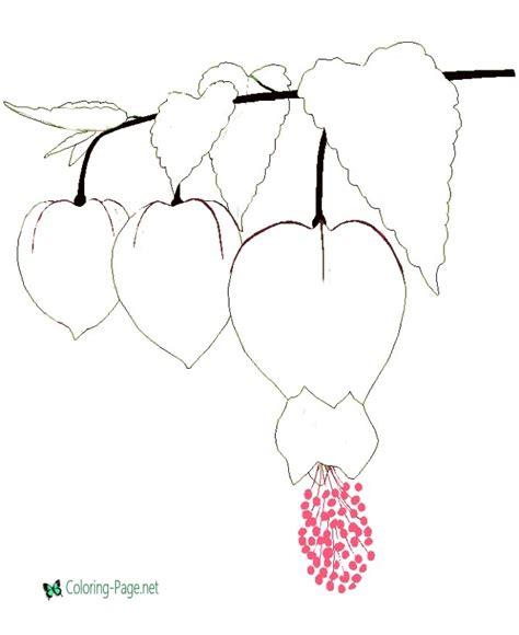 flower coloring pages abutilon