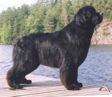 when can puppies start water cutie newfies on 54 pins