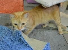 katze macht immer auf den teppich protestierende katze pinkelt auf den teppich mf tierblog