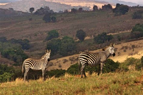 5 Safari Stuff To See by The Best Places To Visit In Africa In 2018 With Photos