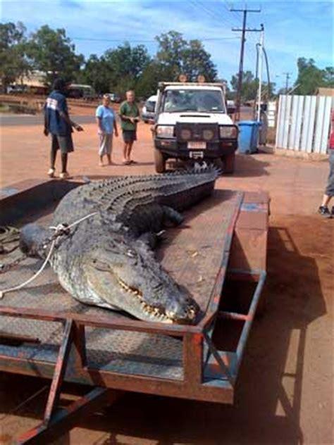 monster crocodile attacks fishing boat crocodile attacks in australia crocodile attacks from