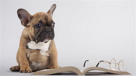 pug book wallpaper book glasses reading pug desktop wallpaper 187 animals 187 goodwp