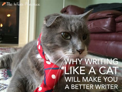 Cat In The Essay by Why Writing Like A Cat Will Make You A Better Writer