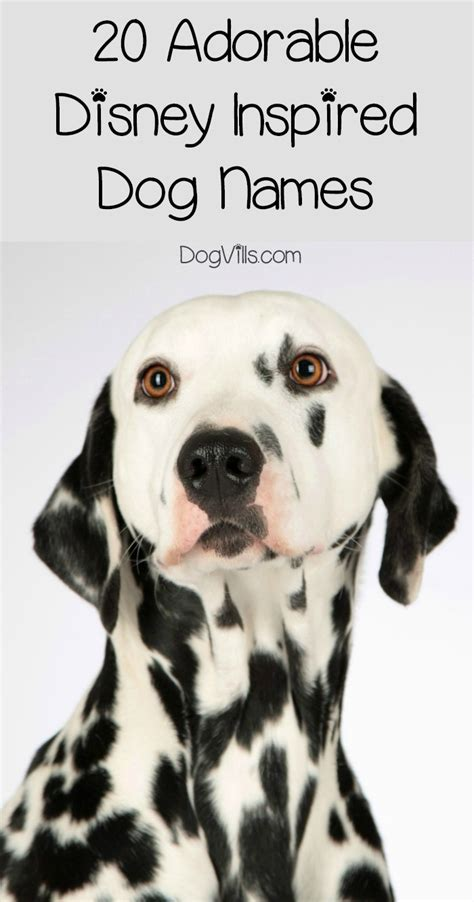 disney names for dogs 20 adorable disney inspired names for boys