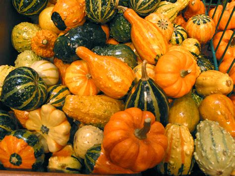 squash free stock photo image picture squash varieties royalty free vegetable stock photography
