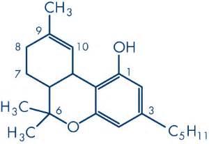 cadena de amor scientific name τετραϋδροκανναβινόλη