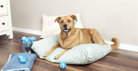cuscino cani cuscini per cani comfort e stile per i vostri cuccioli dalani