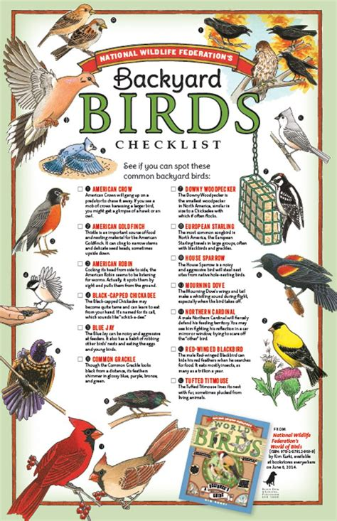 List Of Backyard by Free Bird Anatomy Skill Building Resource