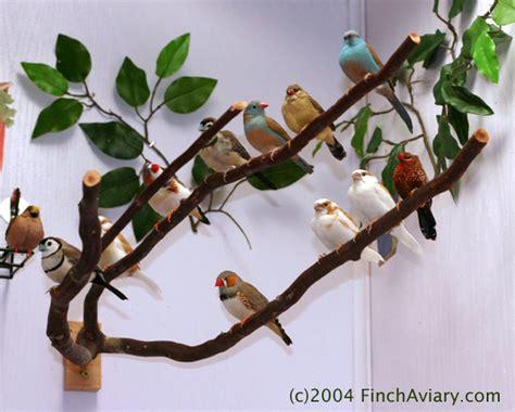 aviary lighting for finches finch aviary birds