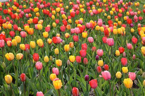 beautiful april flowers flowers of april